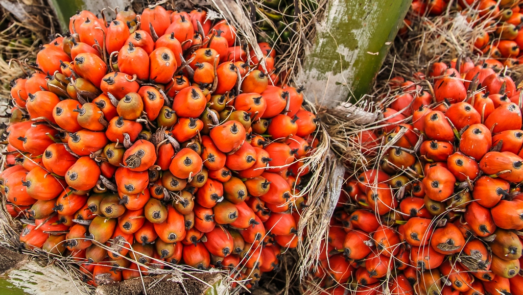French Food and Health Fund: all nutritional, social and environmental aspects related to palm oil
