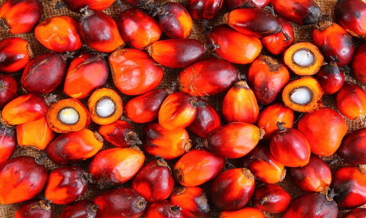 Italy: FFC Writes to Regional Councilors to Stop Palm Oil Ban from Schools