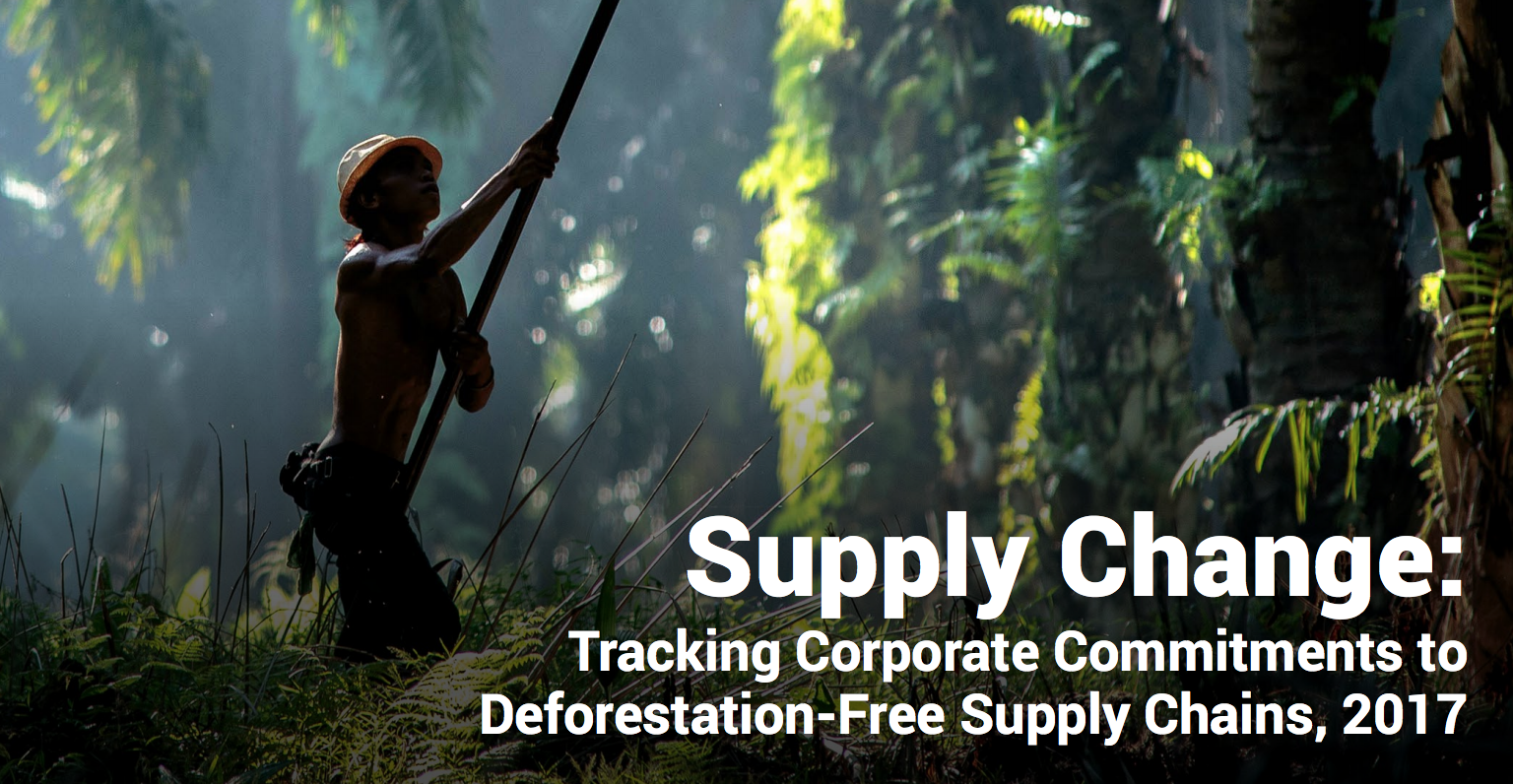 Palm oil is the leading industry in sustainable forestry commitments
