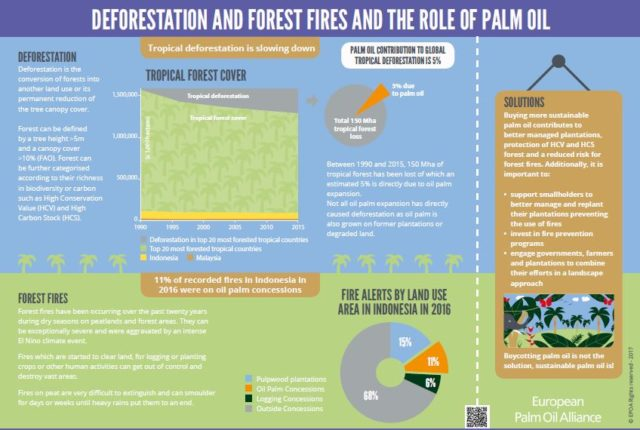 Deforestation and Fires: where does palm oil come into play?