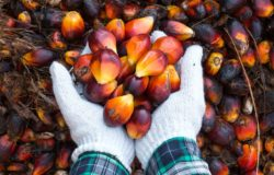 Yield Stability, We Need It, Palm Oil Has It.
