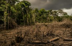 Trapa celebrates its 50 years promoting deforestation